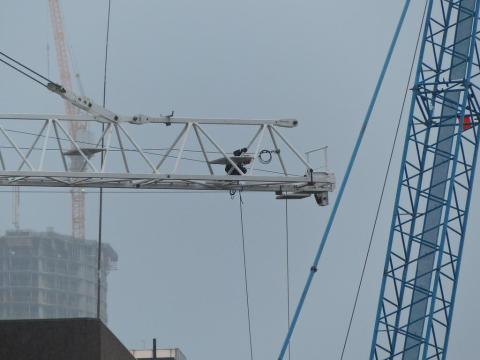 Cranes galore