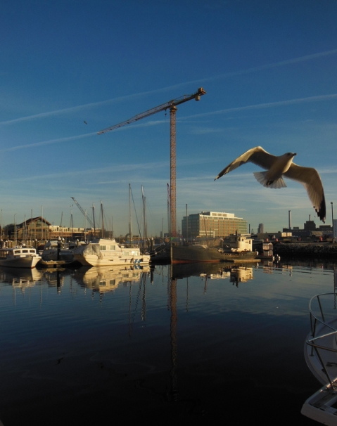 20150314 - Seagull2