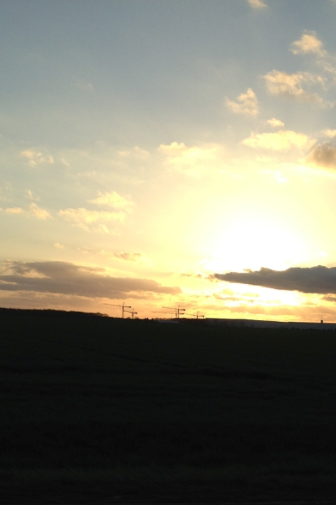 Cranes-Sunset