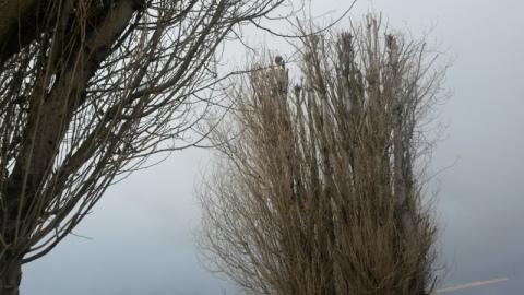 L'arbre qui cache la grue