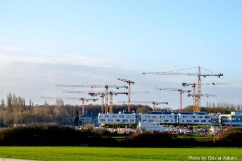 La foret de #grues du Moulon