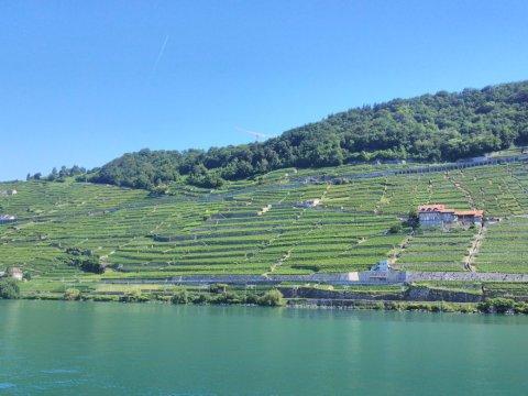 Petite grue et vignes en Lavaux