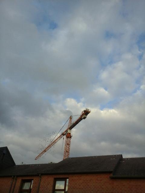 vol-au-dessus-dun-nid-detourneaux