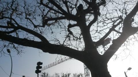 la-branche-grue